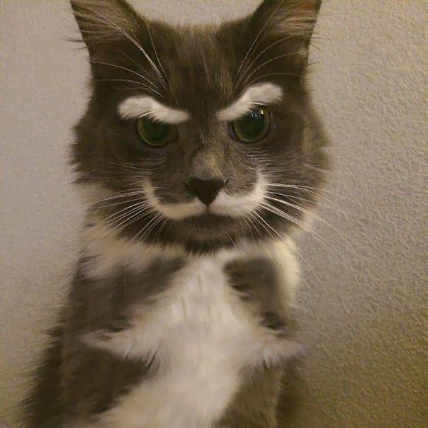 najbardziej-wyjatkowe-futra-kotow (1)