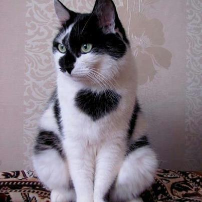 najbardziej-wyjatkowe-futra-kotow (12)
