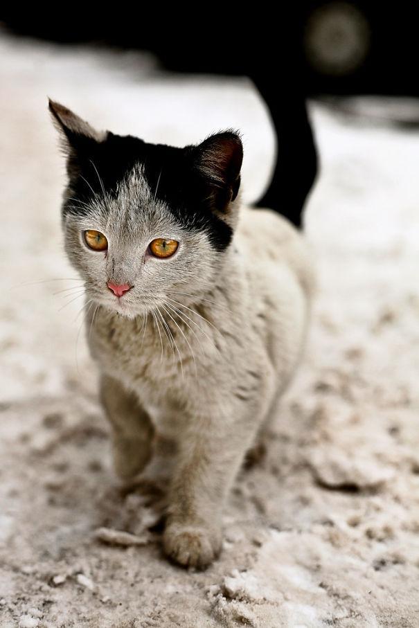 najbardziej-wyjatkowe-futra-kotow (13)