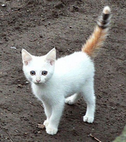najbardziej-wyjatkowe-futra-kotow (14)