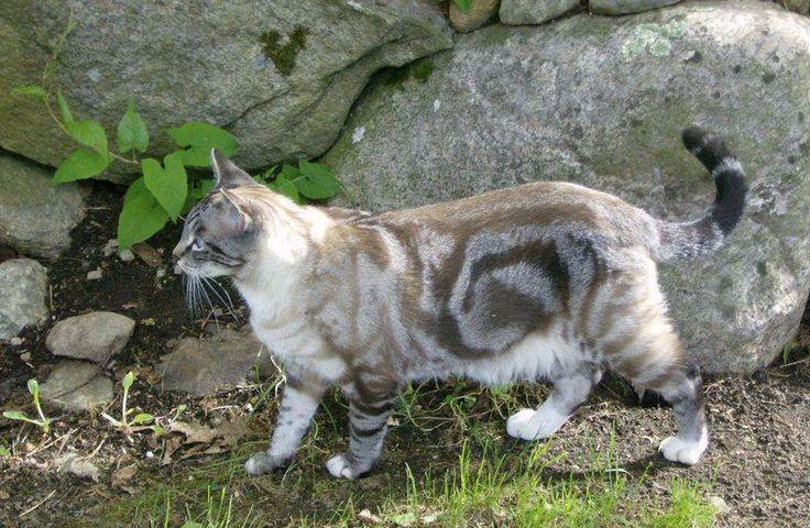 najbardziej-wyjatkowe-futra-kotow (15)