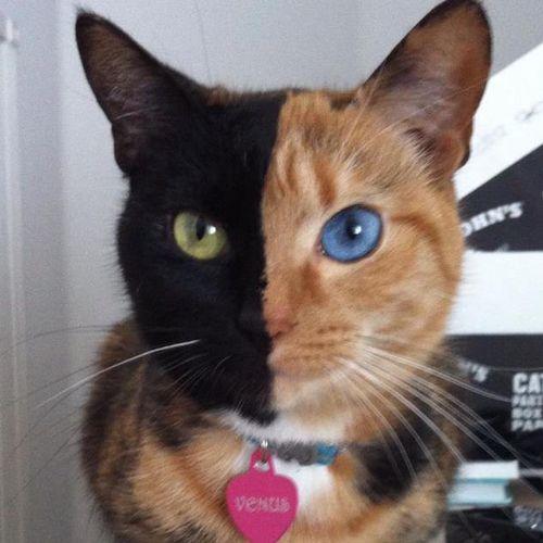 najbardziej-wyjatkowe-futra-kotow (16)