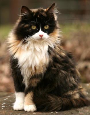 najbardziej-wyjatkowe-futra-kotow (17)