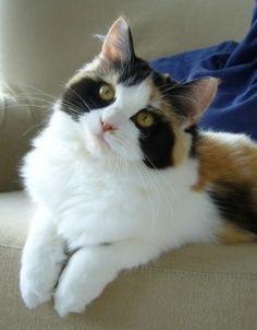 najbardziej-wyjatkowe-futra-kotow (18)