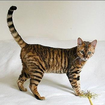 najbardziej-wyjatkowe-futra-kotow (19)