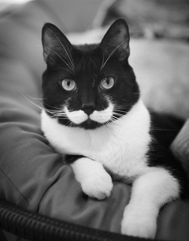 najbardziej-wyjatkowe-futra-kotow (2)