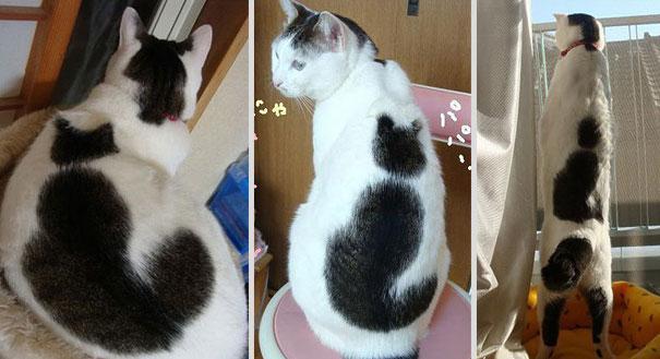 najbardziej-wyjatkowe-futra-kotow (21)
