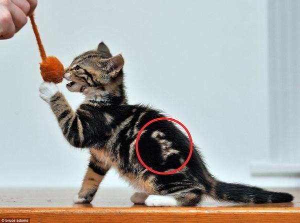 najbardziej-wyjatkowe-futra-kotow (23)