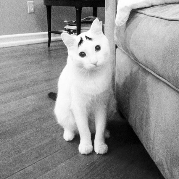 najbardziej-wyjatkowe-futra-kotow (5)