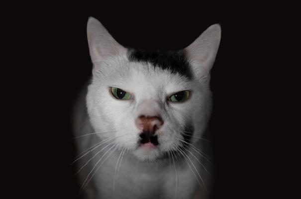 najbardziej-wyjatkowe-futra-kotow (6)