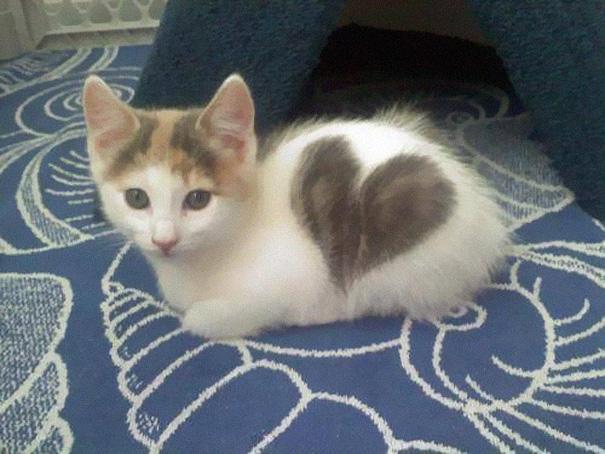najbardziej-wyjatkowe-futra-kotow (8)