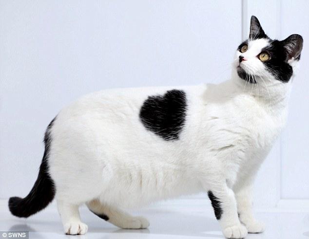 najbardziej-wyjatkowe-futra-kotow (9)