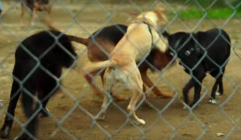 opuszczone psy i więźniowie (1)