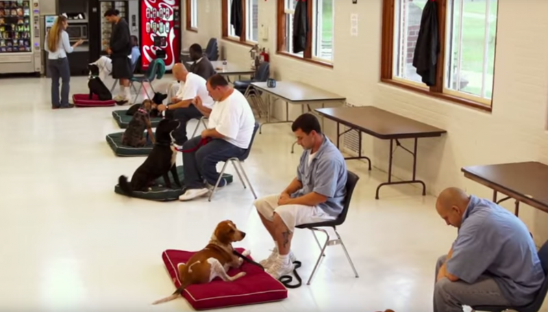 opuszczone psy i więźniowie (2)