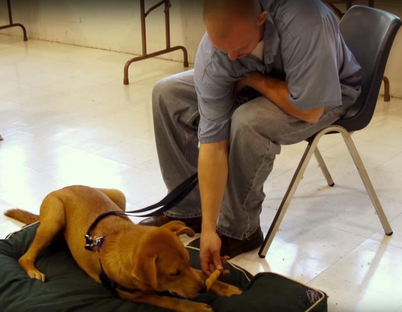 opuszczone psy i więźniowie (3)