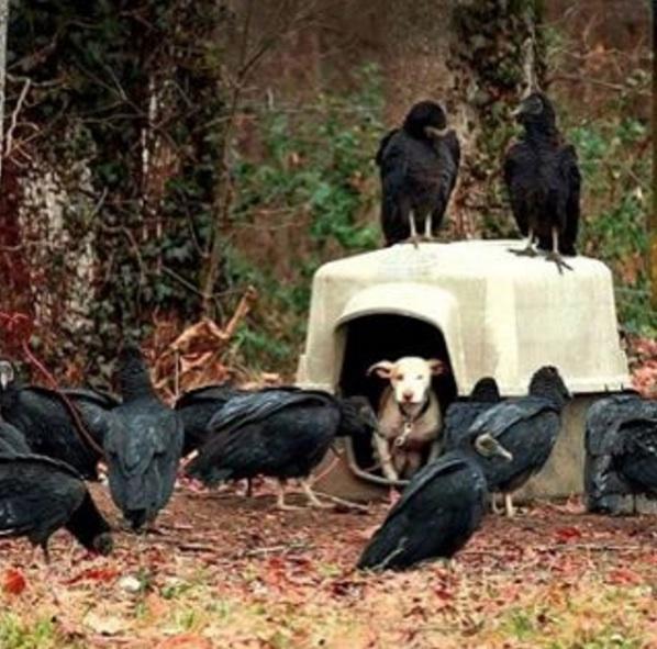 umierajacy-pies-dostal-druga-szanse-na-zycie (1)
