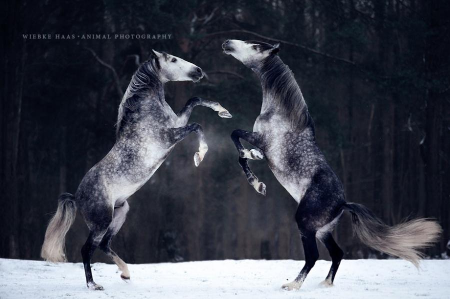 16 cudownych fotografii, ukazujących piękno i klasę koni. Wspaniałe zwierzęta!
