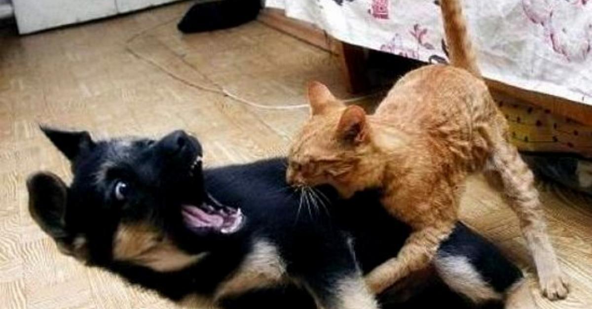 Ukryta kamera pokazuje, jak naprawdę wygląda życie psa z kotem oraz kto z nich rządzi w domu