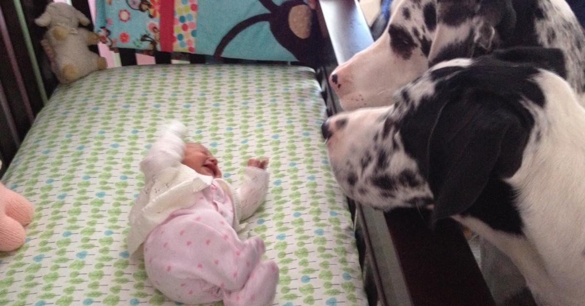 Rodzice zostawili na chwilę niemowlaka sam na sam z psem. Po powrocie ujrzeli najsłodszy widok