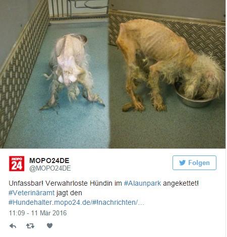 strasznie wychudzony pies