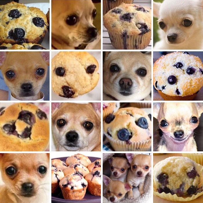8 zdjęć psów, które swoim wyglądem przypominają nam zdecydowanie coś innego. #2 to jest pies?!
