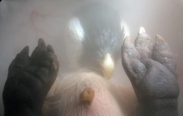 nienarodzone zwierzęta (12)