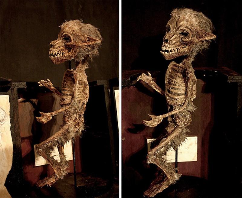 Ten dziwny okaz jest sklasyfikowany jako Homo Lumpus.