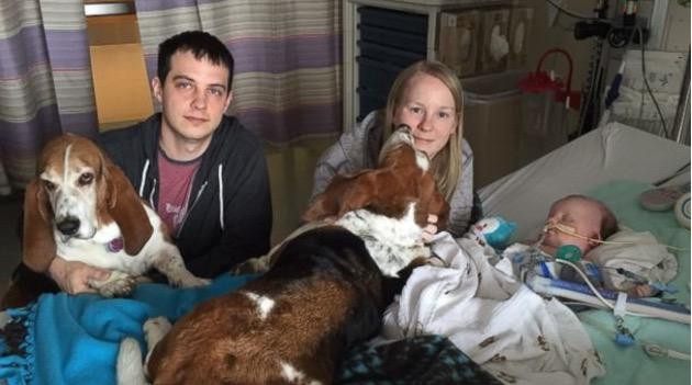 psie odwiedziny w szpitalu (1)