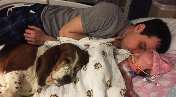 psie odwiedziny w szpitalu (3)