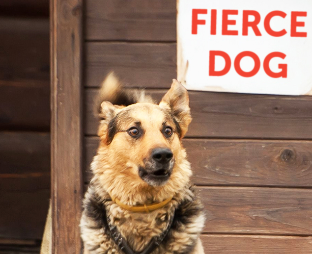 15 psów, których mimika jest nie do przebicia. Ich miny rozkładają na łopatki