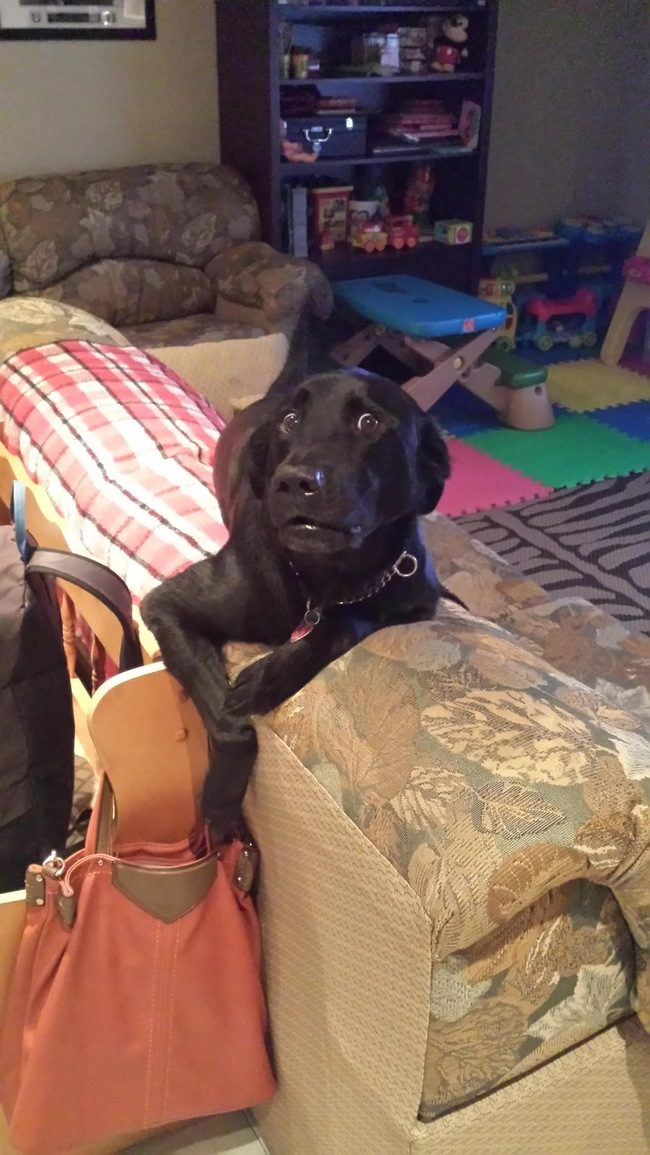 22 winne psy, które nieźle przeskrobały. Ich miny mówią same za siebie !