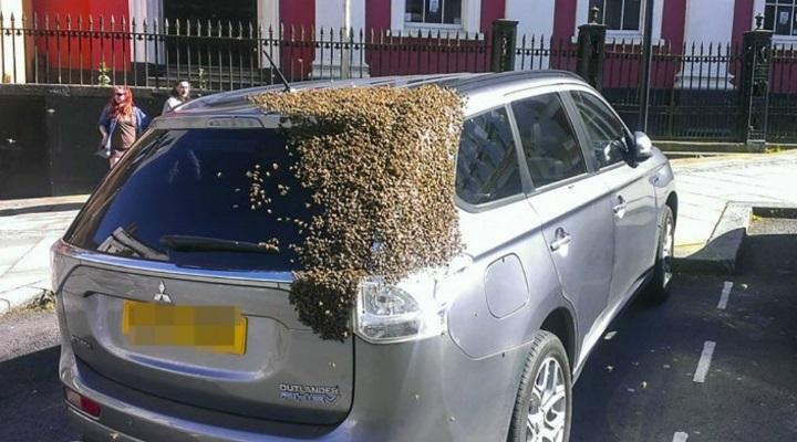 roj-pszczol-zaatakowal-1