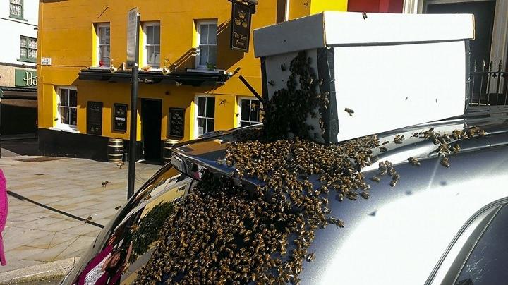 roj-pszczol-zaatakowal-2