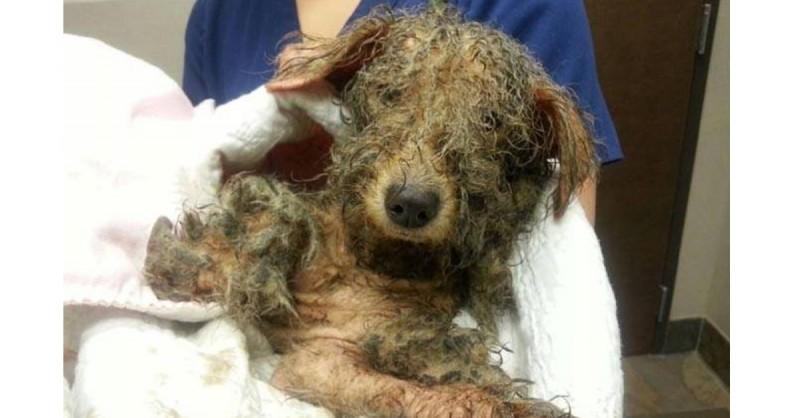 uratowany pies (3)