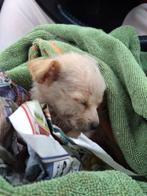 uratowany pies (4)