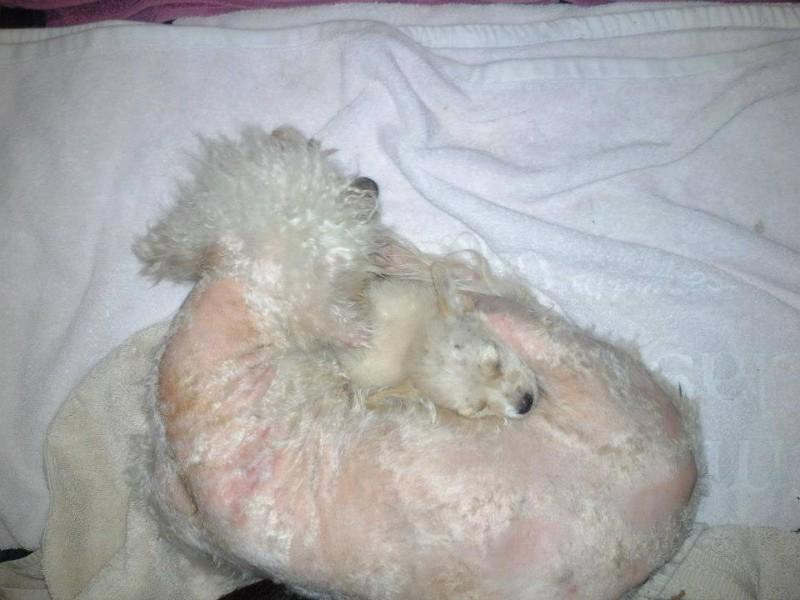 uratowany pies (5)