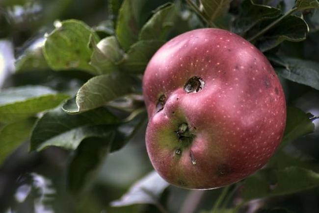 20 owoców i warzyw o dziwnych kształtach. Niektórym będziesz musiał przyjrzeć się dwa razy!