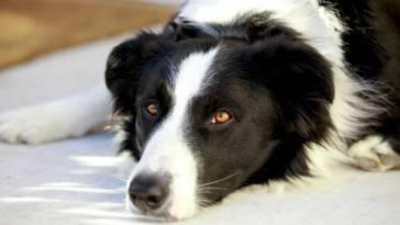 Jak namówić rodziców na psa, kiedy nie chcą o tym słyszeć?