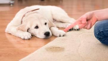 Jak oduczyć psa sikania w domu? Poznaj sprawdzone sposoby!
