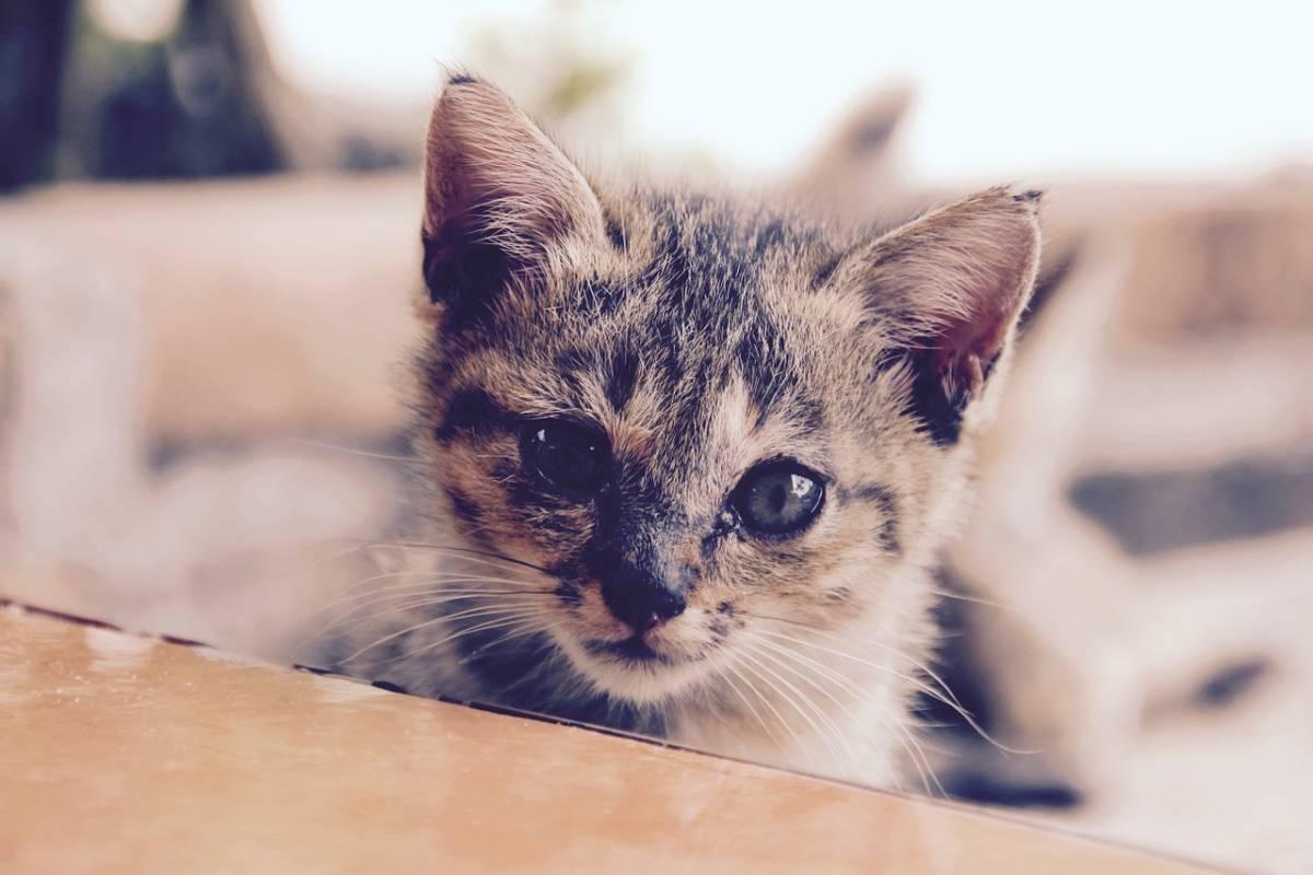 Koty domowe – garść ciekawostek o ulubionych pupilach
