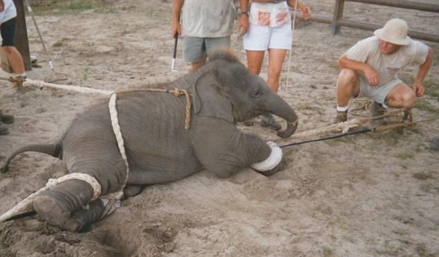 slon (2)