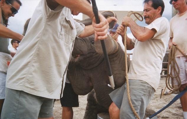 slon (3)