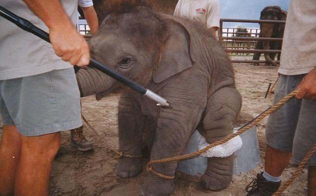 slon (4)