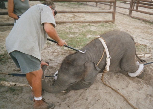 slon (5)