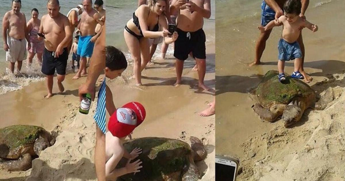 Wyciągnęli żółwia z wody na piasek. Dzieci po nim deptały, a rodzice robili im zdjęcia