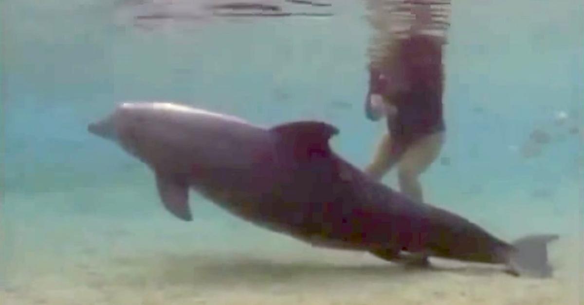 Nurkowie uwiecznili przyjście na świat małego delfina. Cudowne przeżycie!