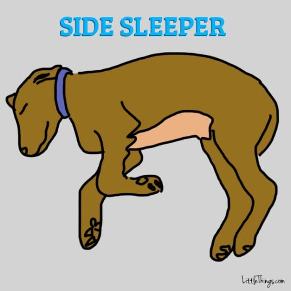 6 pozycji do spania, które powiedzą Ci sporo o charakterze Twojego pupila
