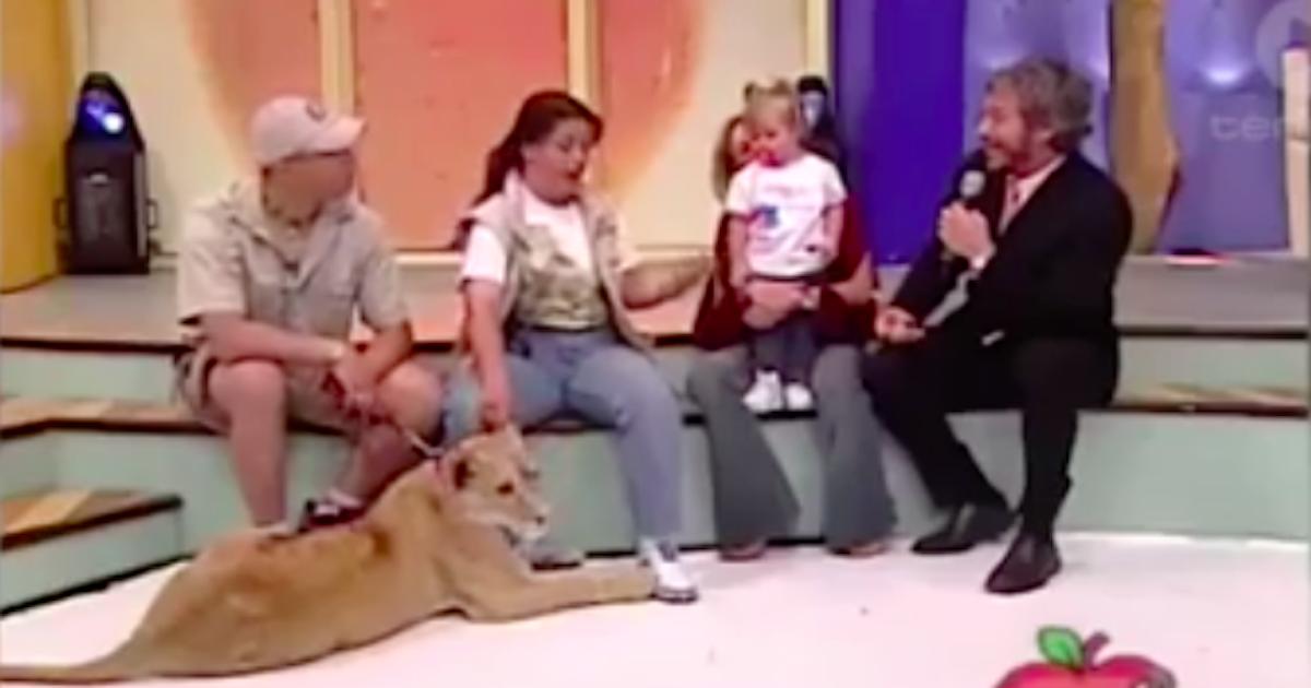 W czasie występu w programie na żywo lew rzucił się na siedzącą obok dziewczynkę