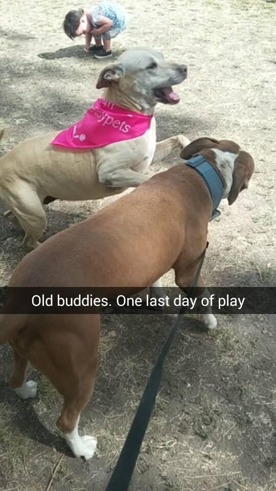 ostatni dzień psa (13)