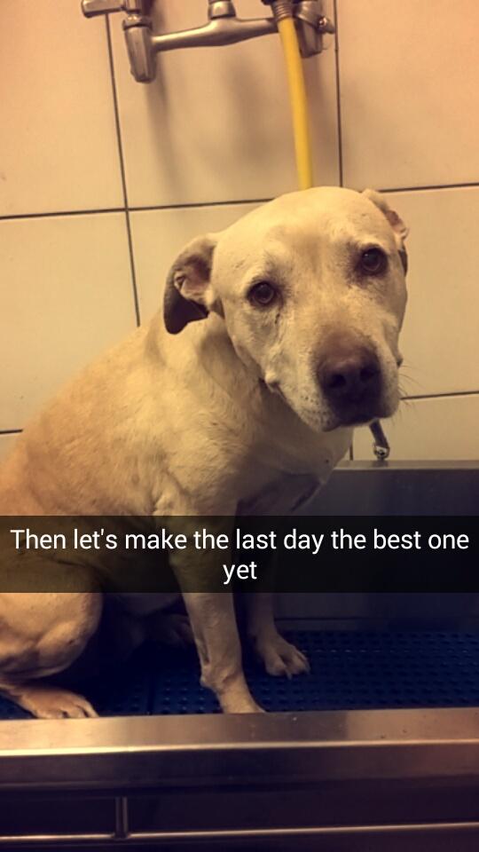 ostatni dzień psa (17)